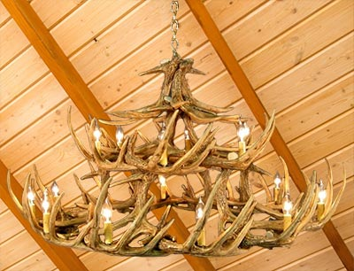 Whitetail Deer Antler Chandelier with Rawhide Shades